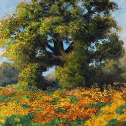 Valley Oak: Amador Flower Farm
